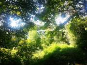 Bridge to Radyr train station concealed by trees
